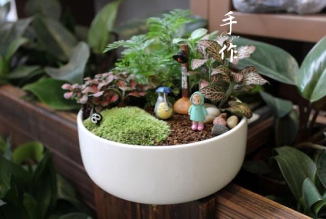 微景观植物组合《魔幻森林》真
